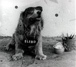 Blind Dog Photo